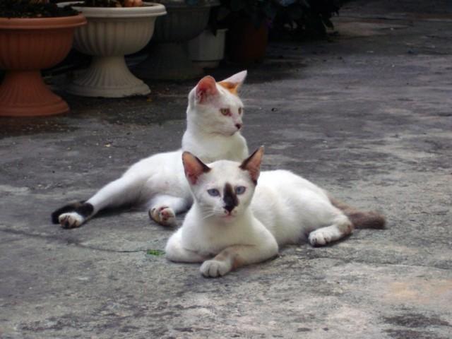 道端でくつろぐ猫
