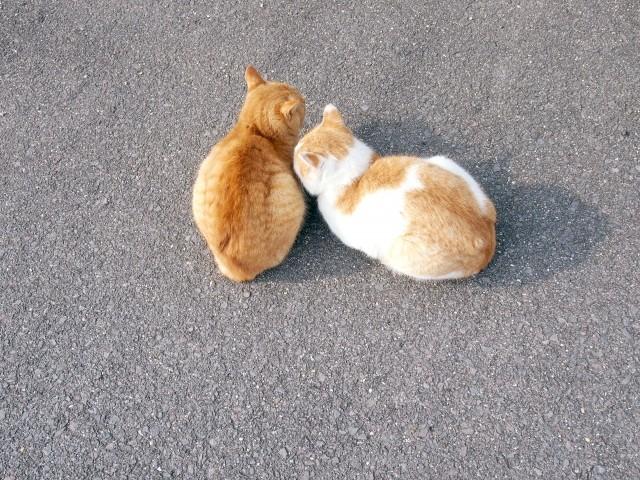 丸まって寄り添う猫