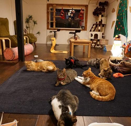 猫suncafeの内観
