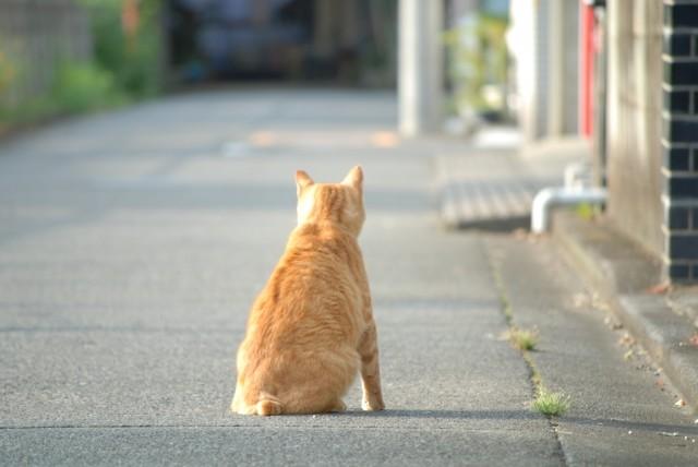 道端に座る猫