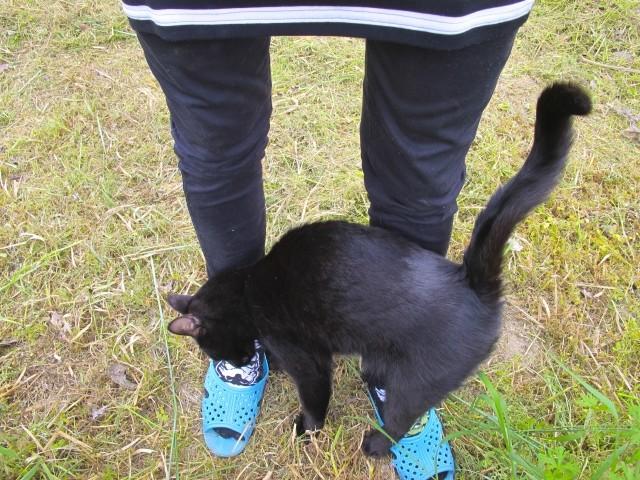 足にすりすりする猫