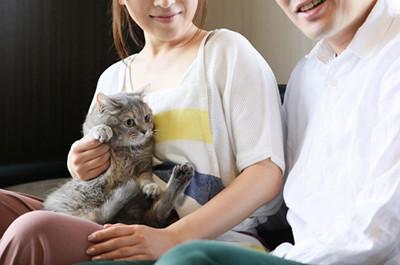 家族に抱っこされる猫
