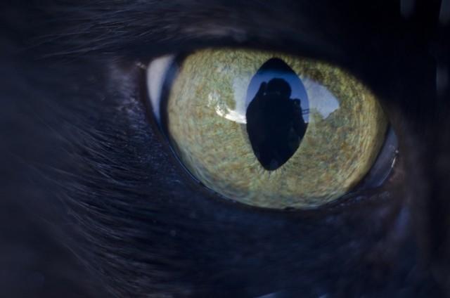 拡大した猫の目