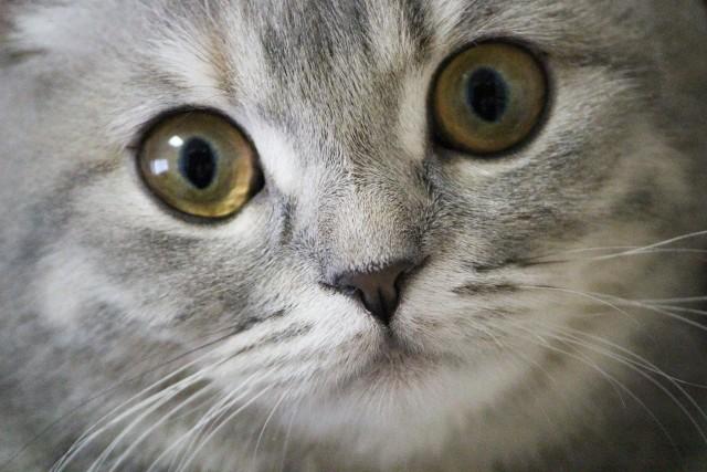 カメラを見つめる猫