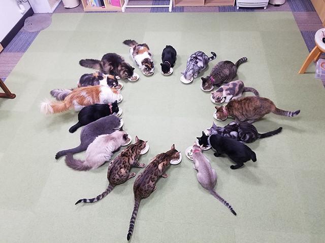 猫八の猫スタッフ