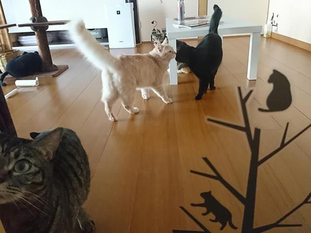 おうちDe猫カフェPoPoKiの内観