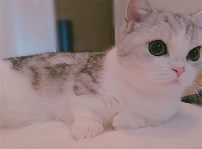 指原の猫のミヌエット五郎