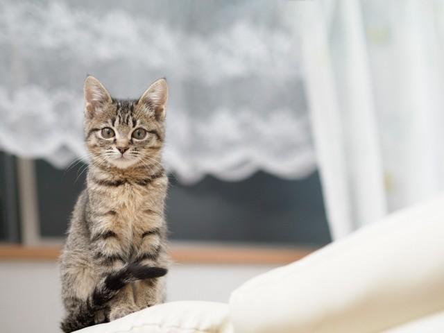 しっぽ巻き座りをしている猫