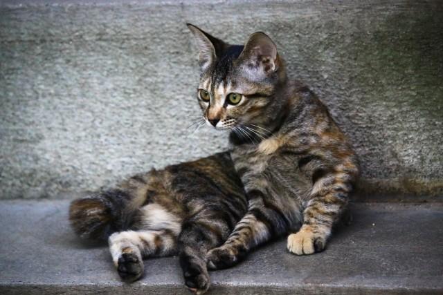 前足だけ立てて座っている猫