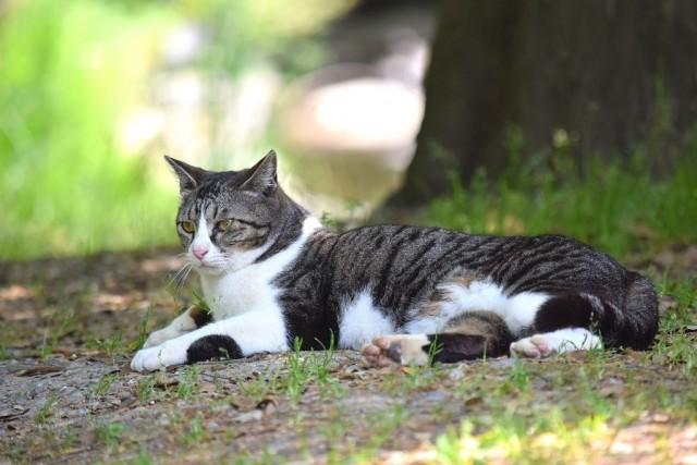 横座りの猫