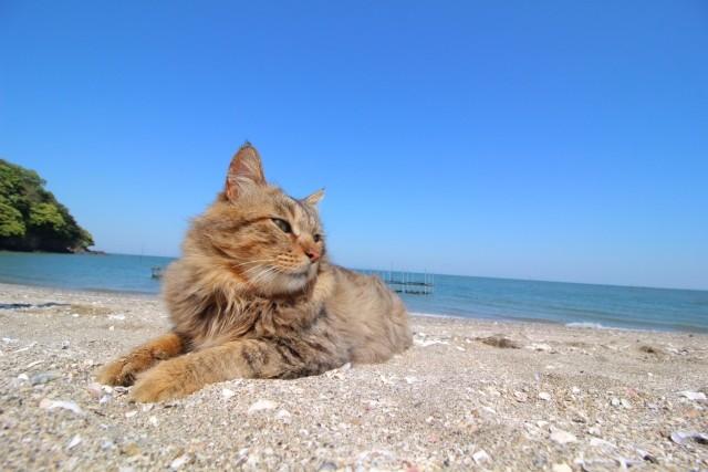 スフィンクス座りをする猫