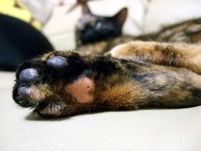 猫の足の肉球