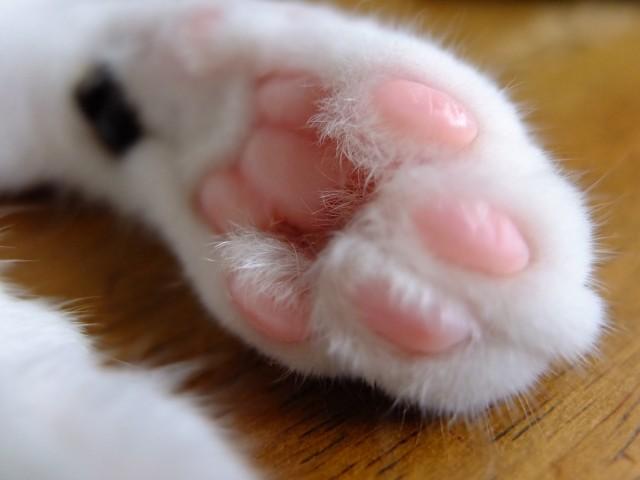 ピンク色の猫の肉球