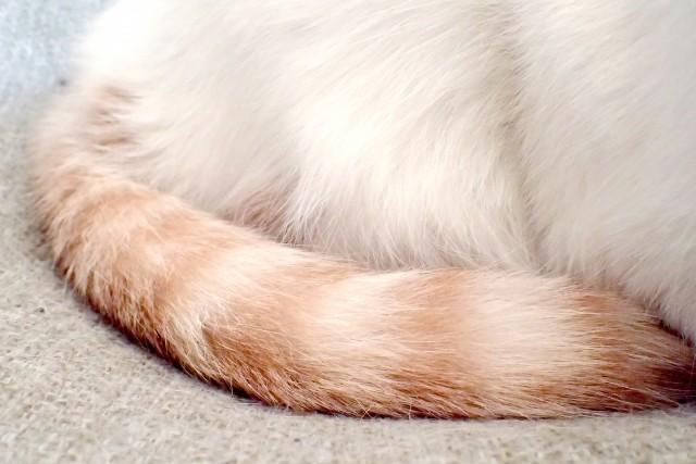 丸まった猫のしっぽ