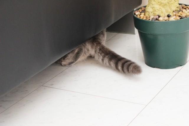 椅子の下に隠れた猫