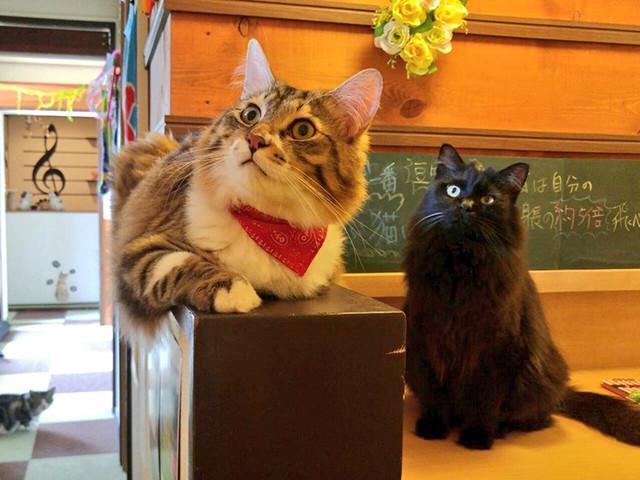 音々猫の猫スタッフ
