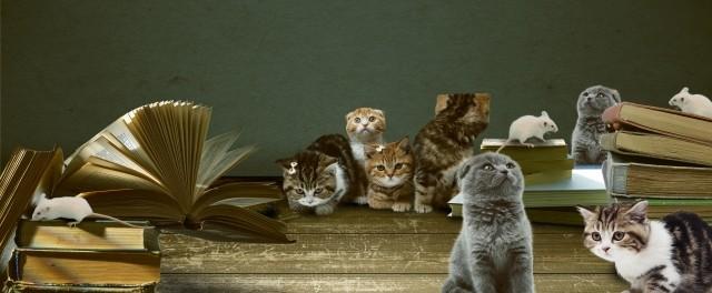 本に群がる猫