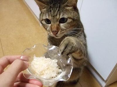 おやつをねだる猫