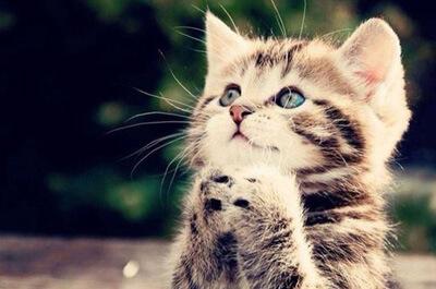 お願いする子猫