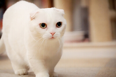 こちらに向かって歩く猫