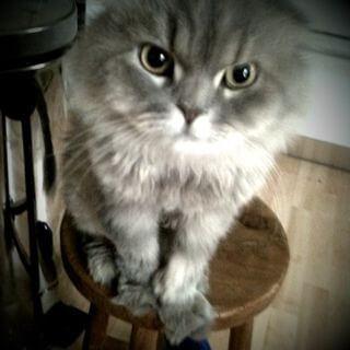つるの剛士の飼い猫の夢子