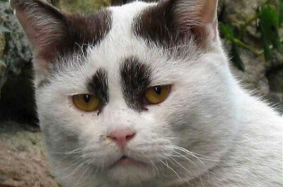 にらみを効かせた猫