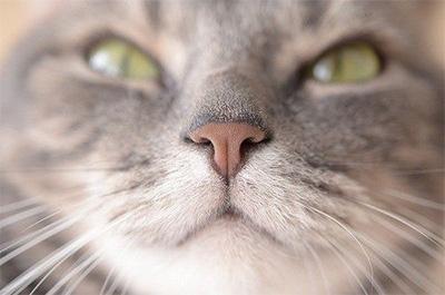 カメラ目線のアップで映る猫