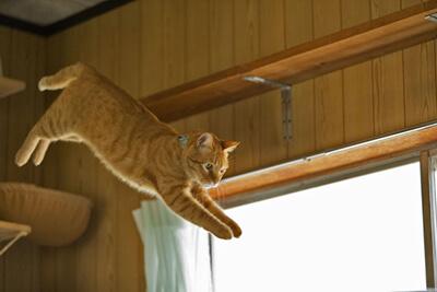 キャットタワーから飛び降りる猫