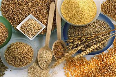 キャットフードに使われる穀物