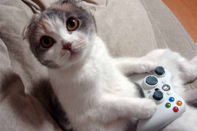 ゲームをしながら留守番をする猫