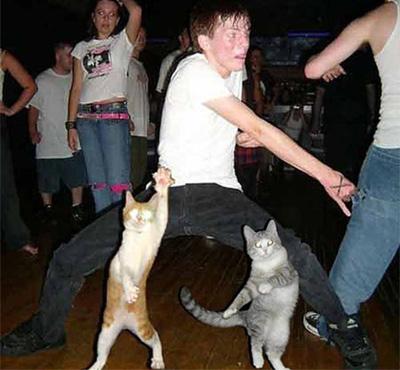 ダンスを踊る猫