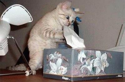 ティッシュを咥える猫