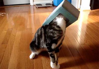 ティッシュボックスに頭を入れる猫