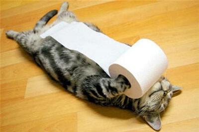 トイレットペーペーを持って寝る猫