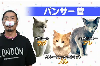 パンサー管と3匹の飼い猫