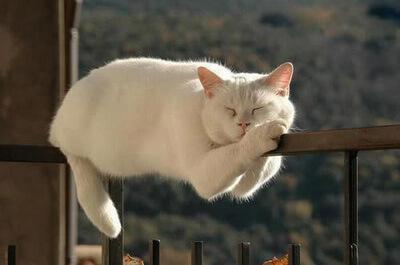 「猫寝てる画像」の画像検索結果