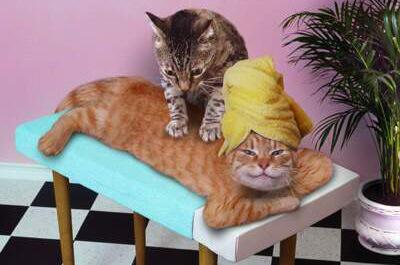 マッサージをする猫