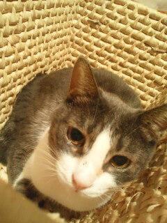 中川翔子の飼い猫ポコニャン
