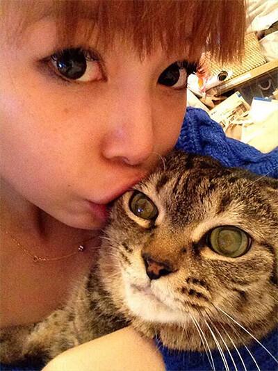 中川翔子の飼い猫マミタス