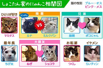 中川翔子の飼い猫相関図