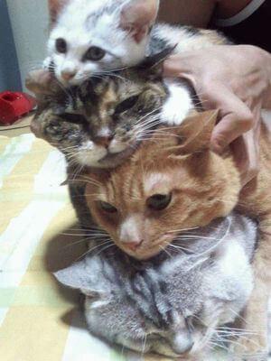何段にも重なり合う猫