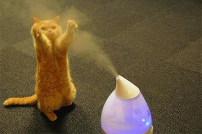 加湿器で遊ぶ猫