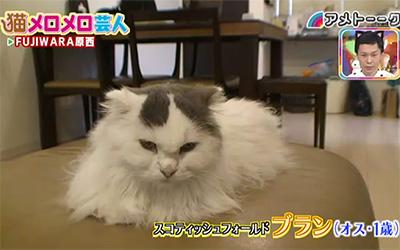 原西の飼い猫ブラン