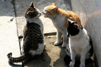 口臭を嗅がせる猫