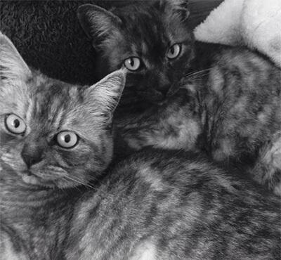 吉岡里帆の二匹の愛猫