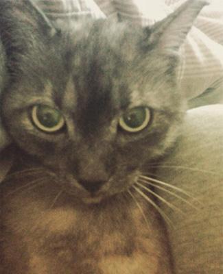 吉岡里帆の飼い猫のチーズ