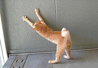壁で爪とぎをする猫
