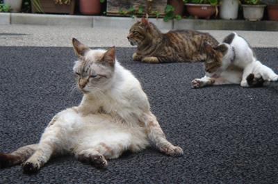 夏バテしている猫達