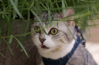 外でフレーメン反応をする猫