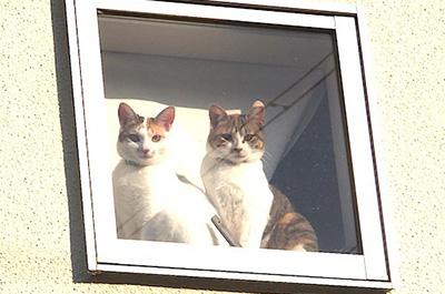外を見つめる二匹の猫
